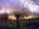 lavender sky by Dehli, Photography->Skies gallery
