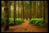 Queenies Woods by JQ, Photography->Landscape gallery