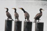 Fisherman friends by Paul_Gerritsen, Photography->Birds gallery