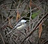 Bird 23 by picardroe, photography->birds gallery