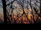 Through the Trees by Wyleecoyote, photography->sunset/rise gallery