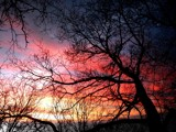 Trees in Sunset by grahamsilversides, Photography->Sunset/Rise gallery
