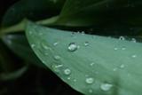 Drip-drop-plop by corunum, photography->macro gallery