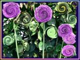 Lollipop Garden by verenabloo, Photography->Manipulation gallery