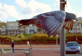 Like A Bird On The Wing part 2 by braces, Photography->Birds gallery