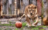 Play Ball by tigger3, photography->action or motion gallery
