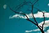 Gulls' Flight by Hukka55, Photography->Skies gallery