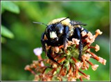 MACRO LESSON by MsCROW, photography->insects/spiders gallery