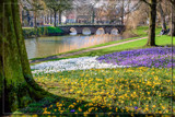 Dutch Springtime by corngrowth, photography->general gallery