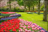 Keukenhof 09 by corngrowth, photography->gardens gallery
