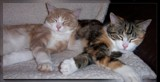 We All Need Somebody To Lean On . . . . by LynEve, photography->pets gallery