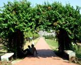 Garden view-5 by sahadk, Photography->Gardens gallery