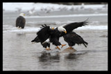 DISRUPTION by garrettparkinson, photography->birds gallery