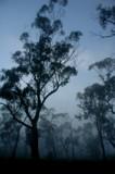 Misty Morning by Samatar, Photography->Landscape gallery