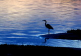 phantom by solita17, Photography->Birds gallery