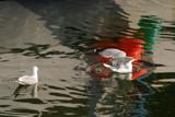 birds in a splash of color by solita17, Photography->Birds gallery