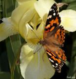 Calendar Garden Foofies #2 by tigger3, photography->butterflies gallery