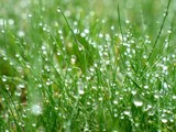 Wet Grass by zippee, Photography->Macro gallery