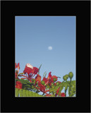 Moon flower by michaeloneill, abstract gallery