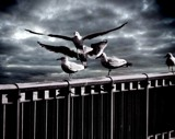 Wing and a Prayer by snapshooter87, photography->manipulation gallery