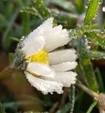 Frozen by twinkel, photography->flowers gallery