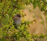 A Bird by biffobear, photography->birds gallery