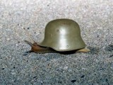 War Snail by Nicky, Photography->Manipulation gallery