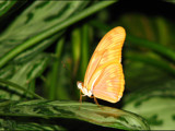 Yellow Butterfly by dwdharvey, Photography->Butterflies gallery