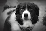 Geordie In Black & White by MJsPhotos, contests->b/w challenge gallery