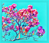 Magnolia Manip by LynEve, photography->manipulation gallery