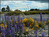 Wildflowers by LynEve, Photography->Landscape gallery