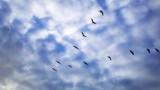 Pelican V by Saggio, photography->birds gallery