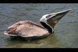 swallow by jeenie11, Photography->Birds gallery