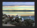 A Gathering of Gulls by LynEve, Photography->Birds gallery