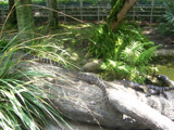 Lazy Alligators @ Sea World by akuns9483, Photography->Reptiles/amphibians gallery