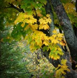 Autumn colors by picardroe, photography->nature gallery