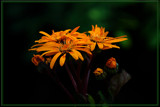 A Calendar Delight by tigger3, photography->flowers gallery