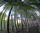 Bamboo Forest by danjacobs, photography->landscape gallery