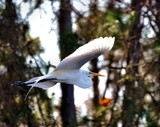 Gliding by SR21, Photography->Birds gallery