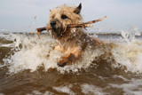 Simba at Sea by Paul_Gerritsen, Photography->Pets gallery