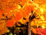 Fuego by jojomercury, Photography->Nature gallery