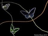 Butterflies 2012 by Neass, computer->landscape gallery