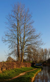 Bare Tree by braces, photography->nature gallery