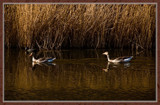 Rammekenshoek 03 by corngrowth, photography->birds gallery