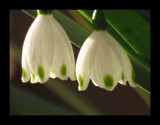 Bells by skapie, Photography->Flowers gallery