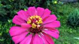 Spreading joy-50 by sahadk, photography->flowers gallery
