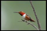 Redo by garrettparkinson, photography->birds gallery