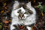 Autumn Leaves and a sleepy cat . . .  by LynEve, photography->pets gallery