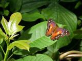 Sunbathing by rawtsn, Photography->Butterflies gallery