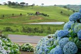 hortensias azules by ludovico, photography->landscape gallery